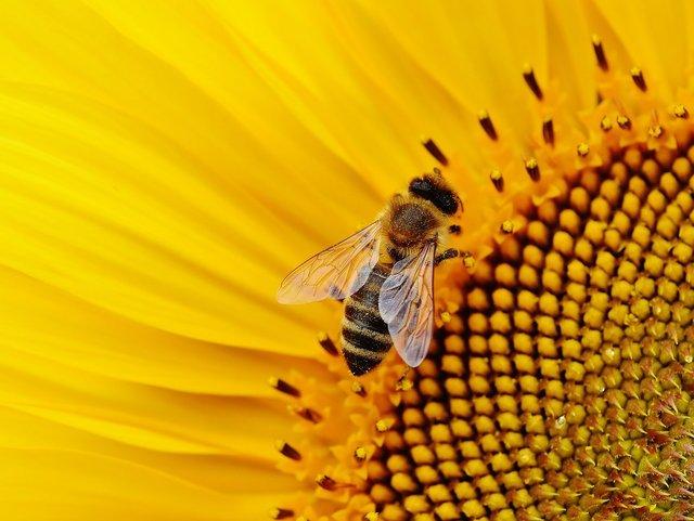 sun-flower-1643794_1280.jpg