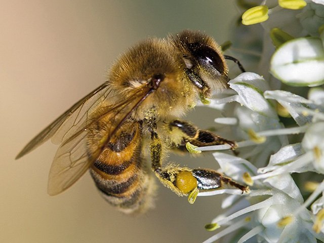 Bild-Bienenretter_300dpi.jpg