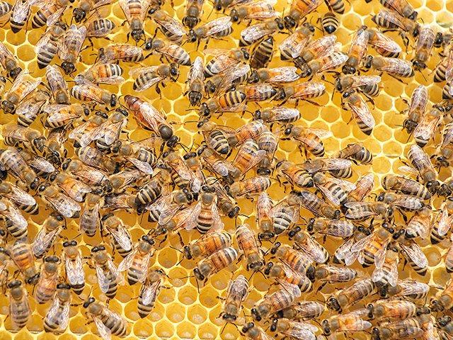 15.8._-Luise-Meier-Workshop_swarm-of-b-ees-3424406-(c)-James-Wainscoat-_unsplash.jpg