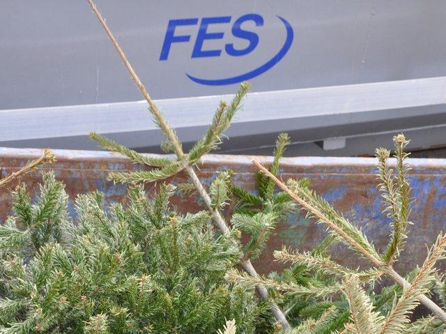 Weihnachtsbäume_Copyright_FES (1).jpg