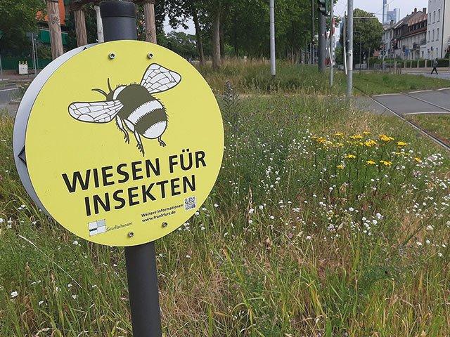 Insektenwiese_Stresemannallee_copyright_Stadt_Frankfurt_am_Main_Gruenflaechenamt.jpg