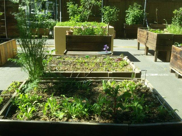 Neuer Frankfurter Garten.jpg