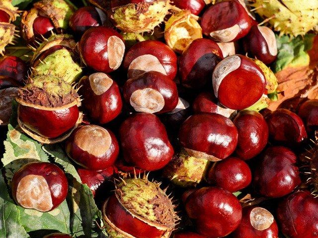 chestnut-1710430_1920.jpg