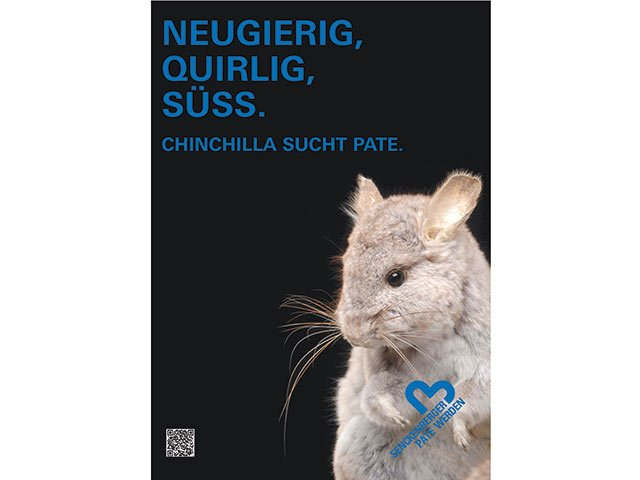 SenckenbergChinchilla.jpg